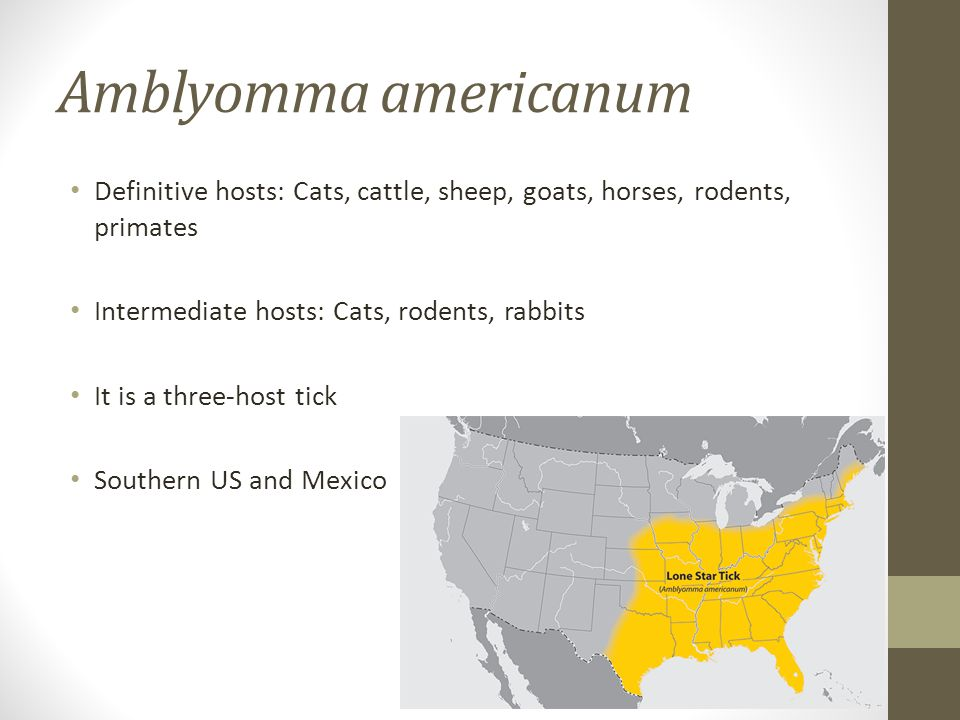 Amblyomma americanum Definitive hosts: Cats, cattle, sheep, goats, horses, rodents, primates. Intermediate hosts: Cats, rodents, rabbits.