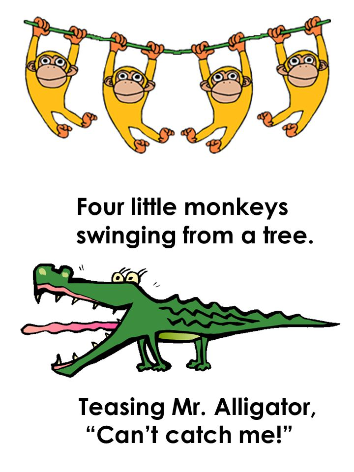 Four little monkeys swinging from a tree. Teasing Mr. Alligator, Can't catch me!