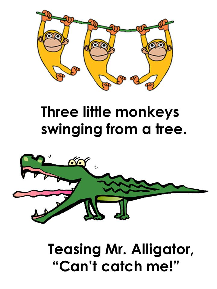 Three little monkeys swinging from a tree. Teasing Mr. Alligator, Can't catch me!