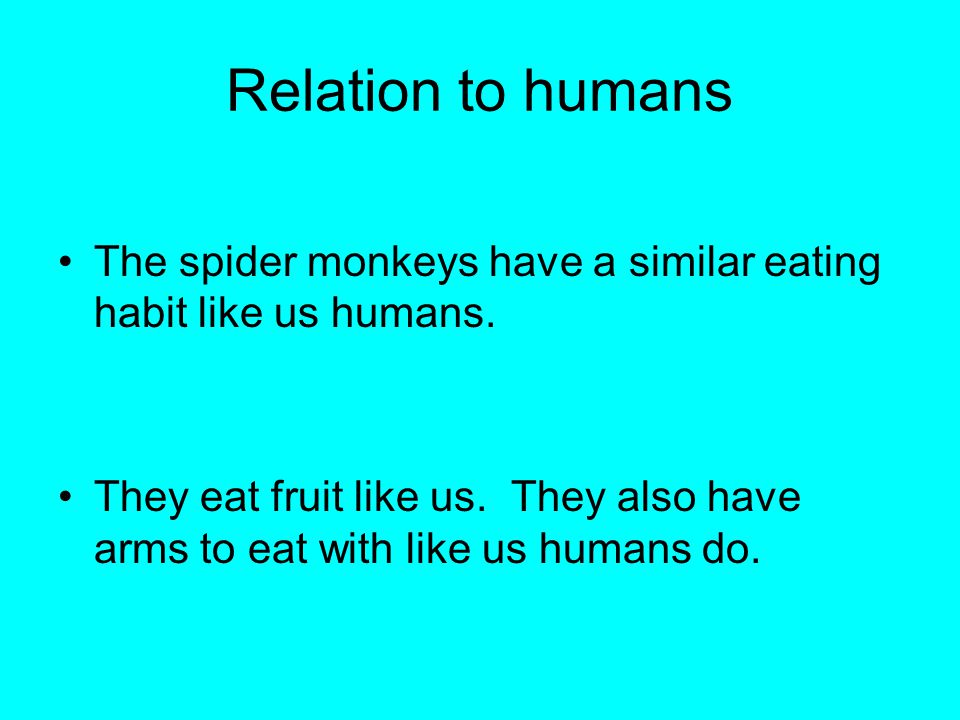 Relation to humans The spider monkeys have a similar eating habit like us humans.