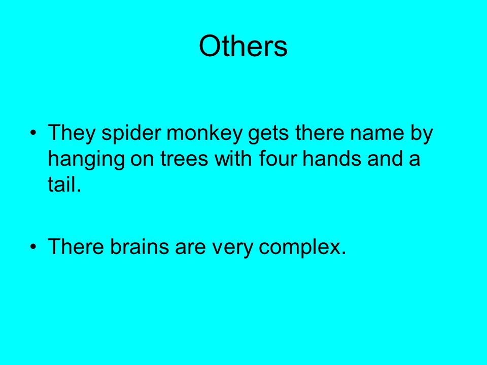 Others They spider monkey gets there name by hanging on trees with four hands and a tail.