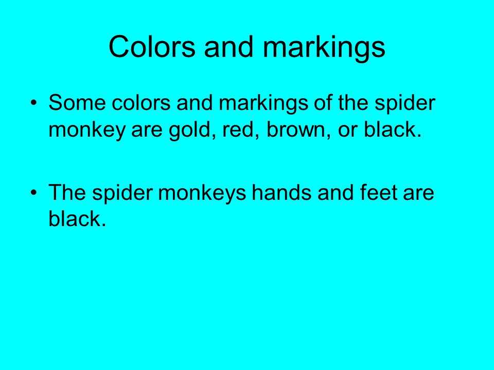 Colors and markings Some colors and markings of the spider monkey are gold, red, brown, or black.