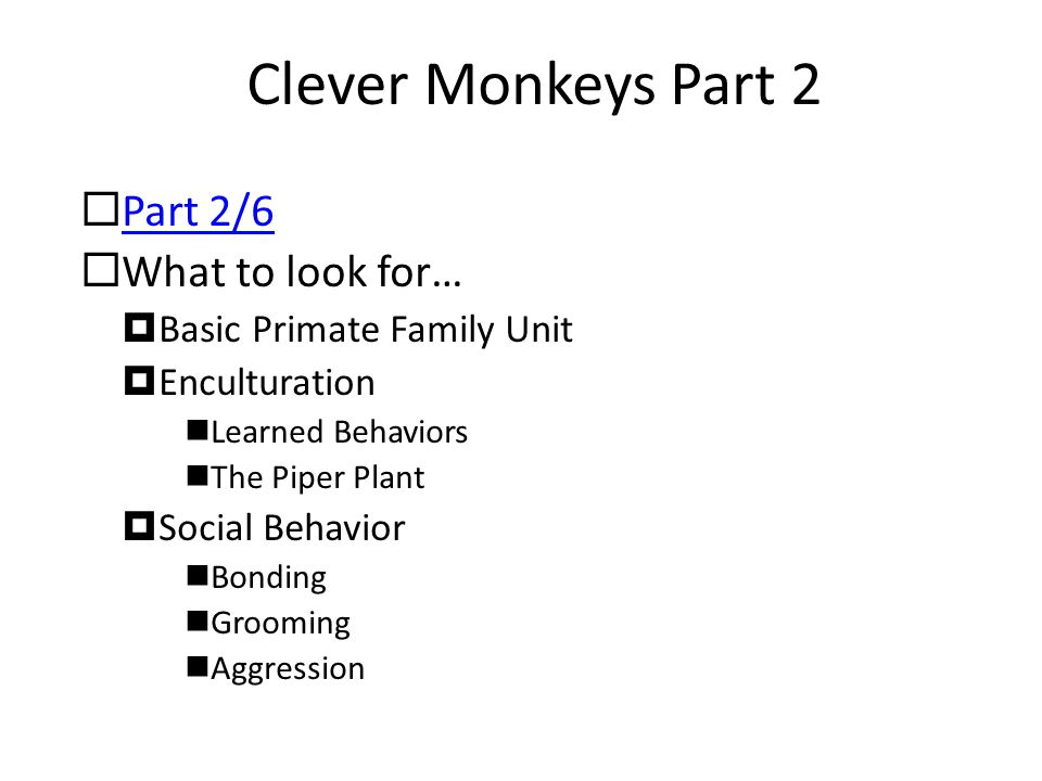 Clever Monkeys Part 2 Part 2/6 What to look for…