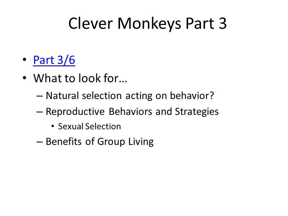Clever Monkeys Part 3 Part 3/6 What to look for…