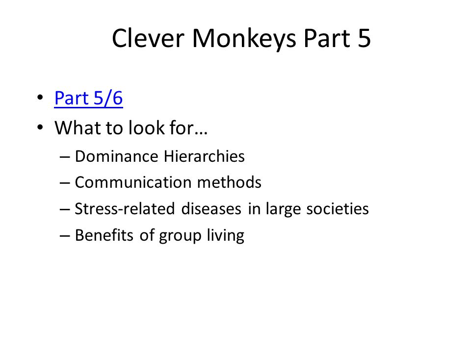 Clever Monkeys Part 5 Part 5/6 What to look for… Dominance Hierarchies