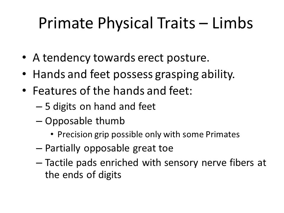 Primate Physical Traits – Limbs