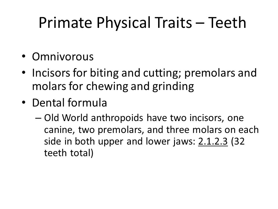 Primate Physical Traits – Teeth