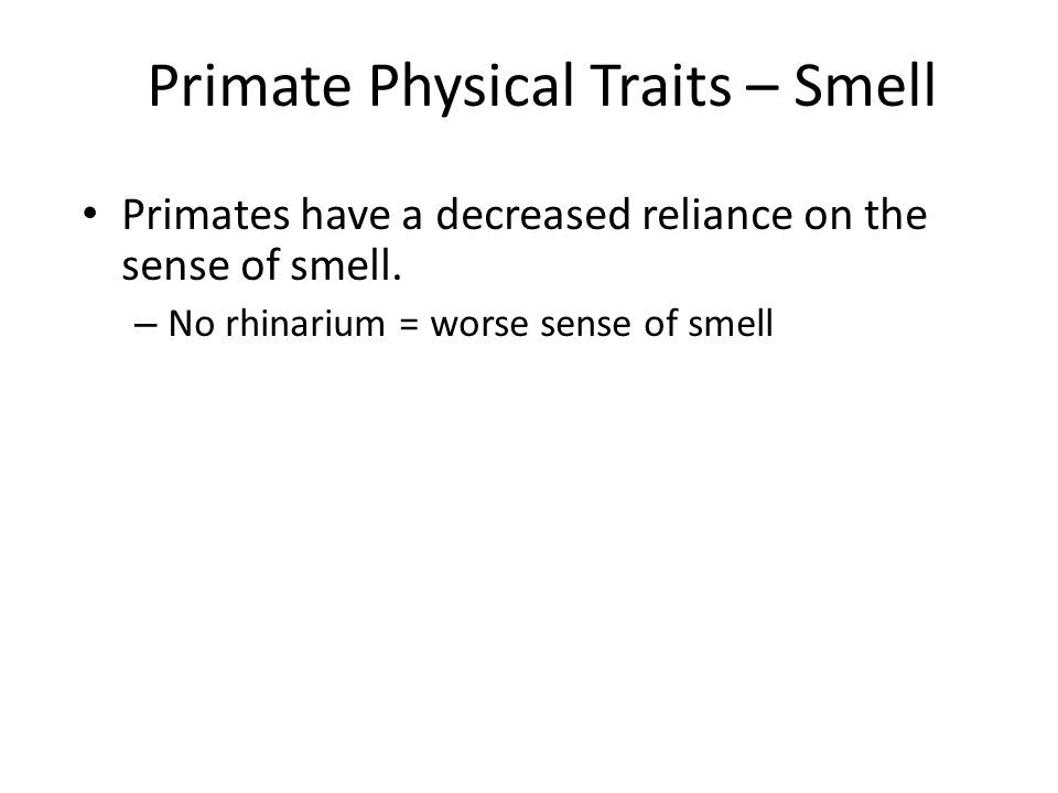 Primate Physical Traits – Smell