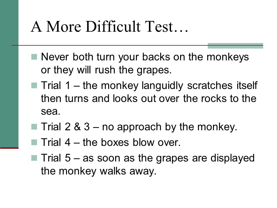 A More Difficult Test… Never both turn your backs on the monkeys or they will rush the grapes.