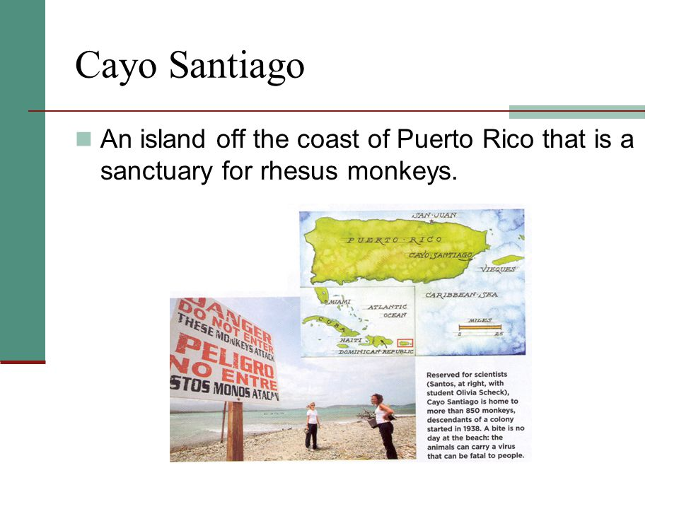 Cayo Santiago An island off the coast of Puerto Rico that is a sanctuary for rhesus monkeys.