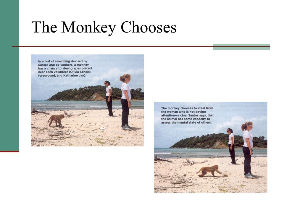 The Monkey Chooses