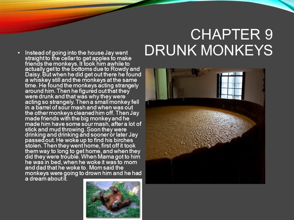 Chapter 9 drunk MONKEYS