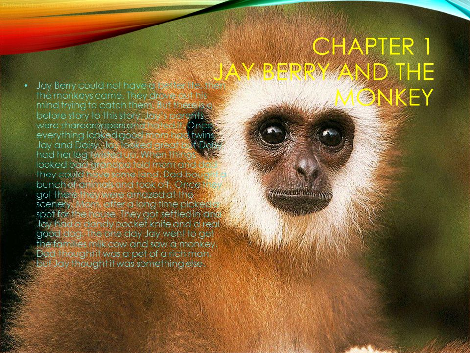 Chapter 1 Jay Berry and the Monkey