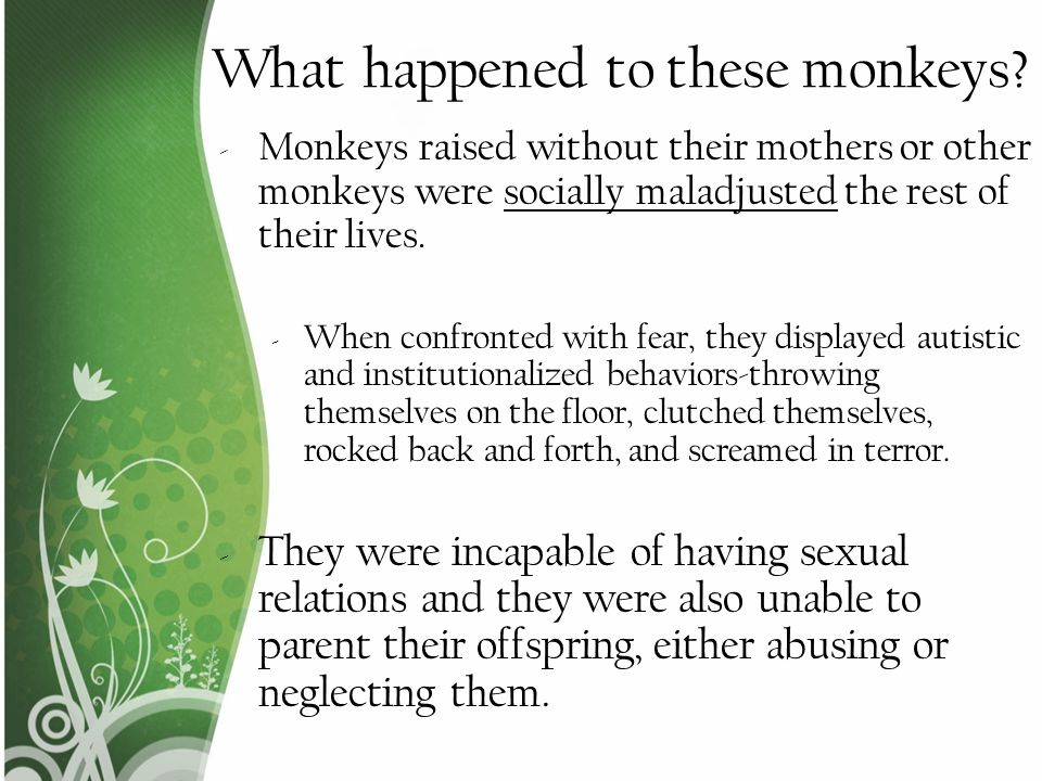 What happened to these monkeys