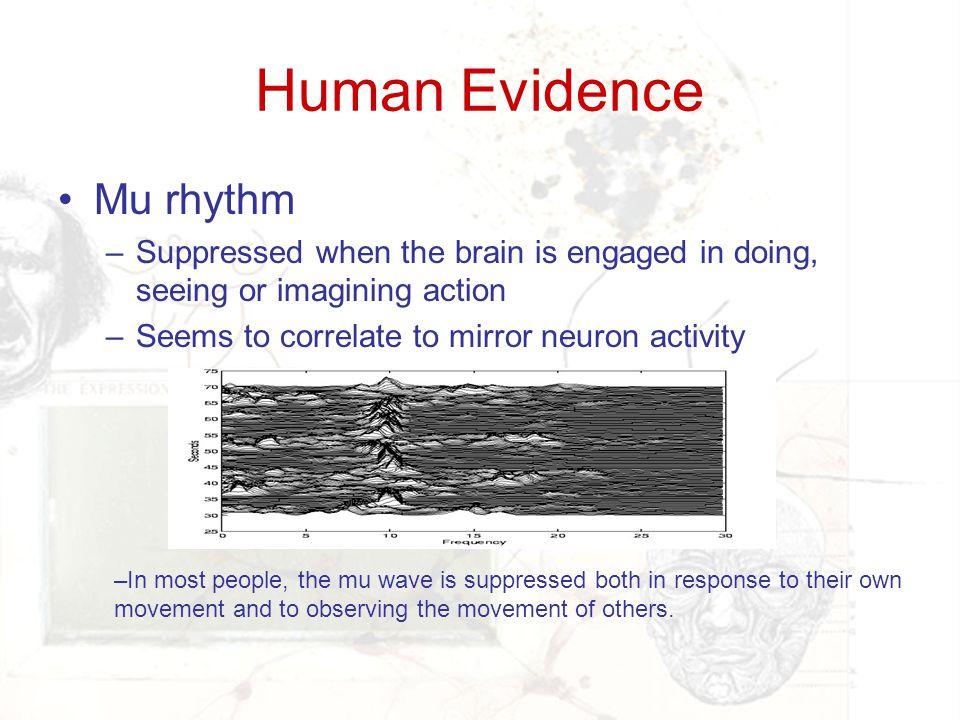 Human Evidence Mu rhythm