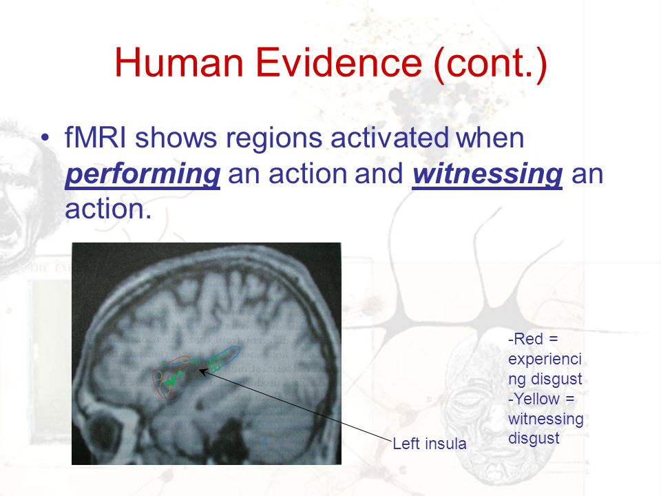 Human Evidence (cont.) fMRI shows regions activated when performing an action and witnessing an action.