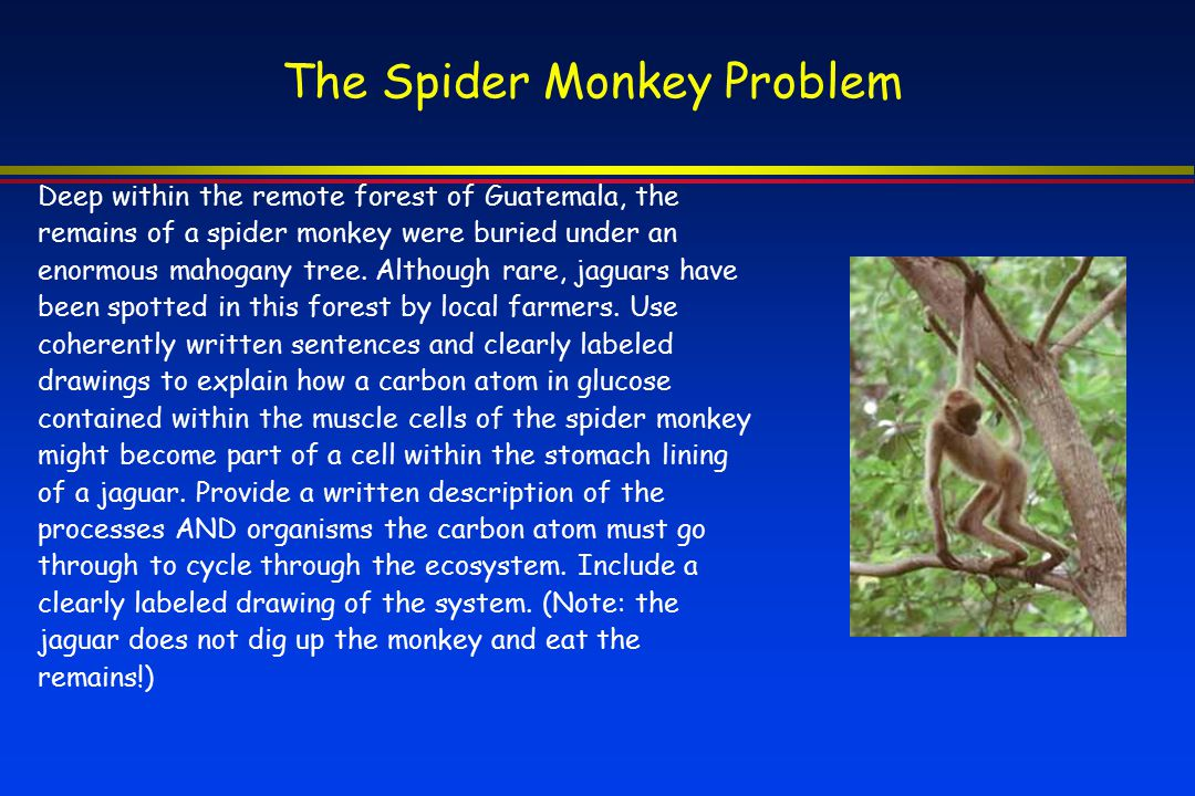The Spider Monkey Problem