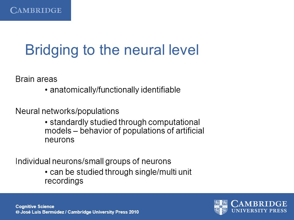 Bridging to the neural level