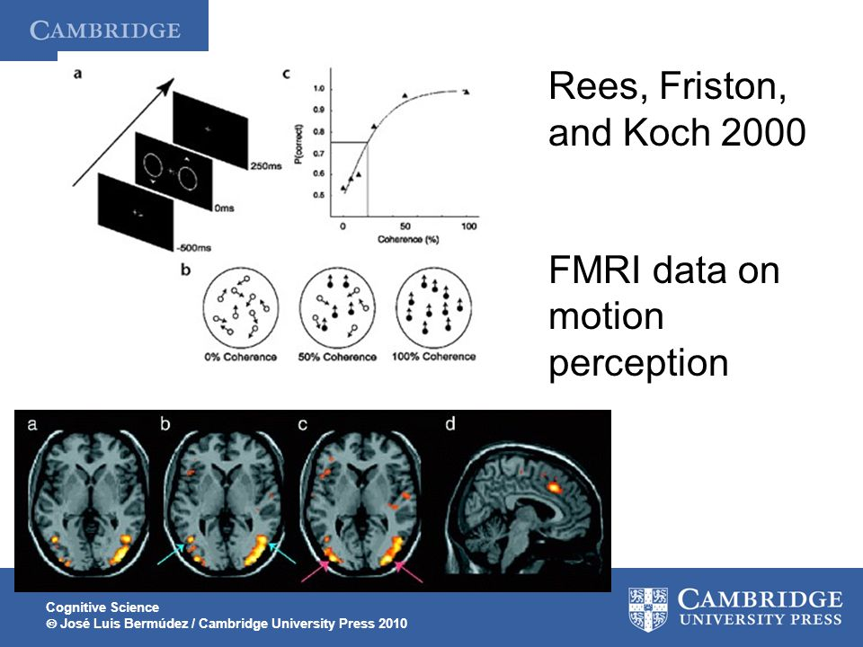 FMRI data on motion perception