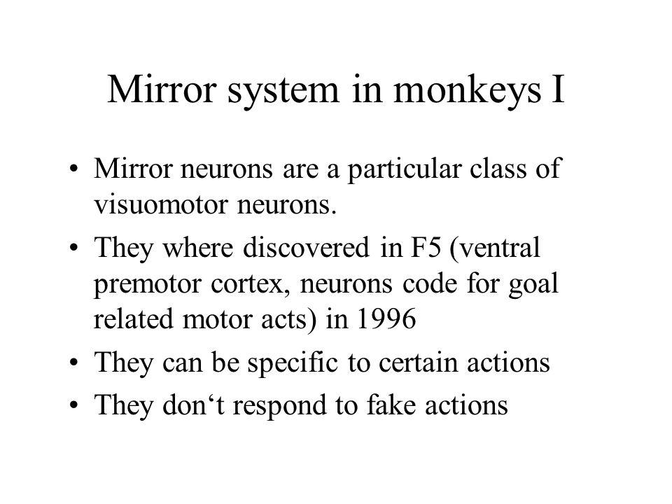 Mirror system in monkeys I