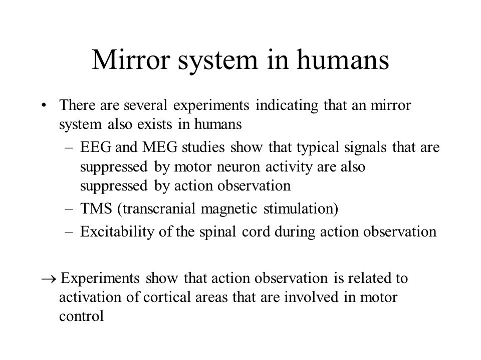 Mirror system in humans