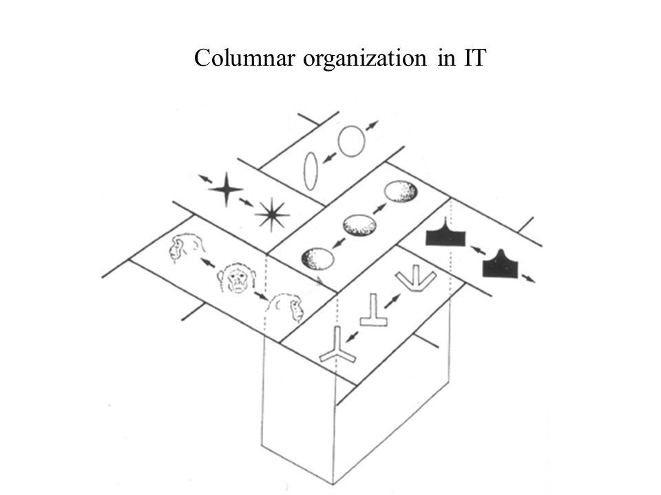 Columnar organization in IT