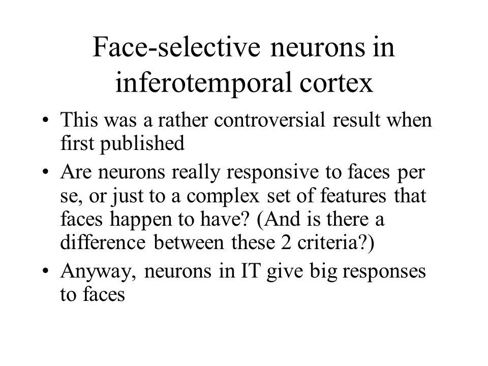 Face-selective neurons in inferotemporal cortex