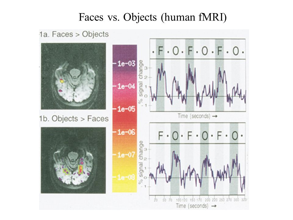 Faces vs. Objects (human fMRI)