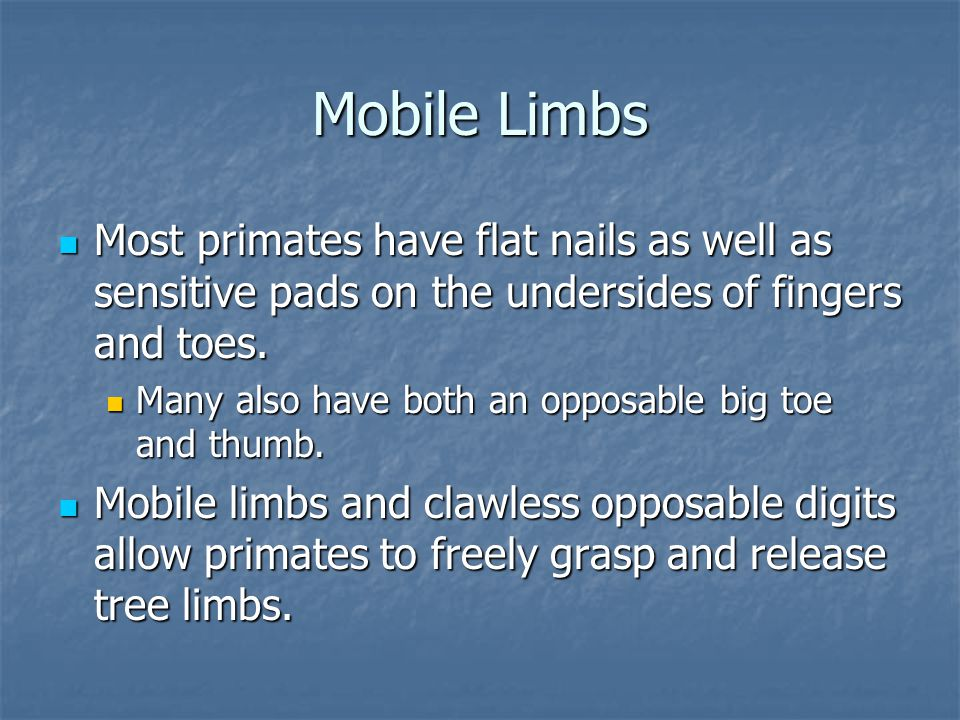 Mobile Limbs Most primates have flat nails as well as sensitive pads on the undersides of fingers and toes.