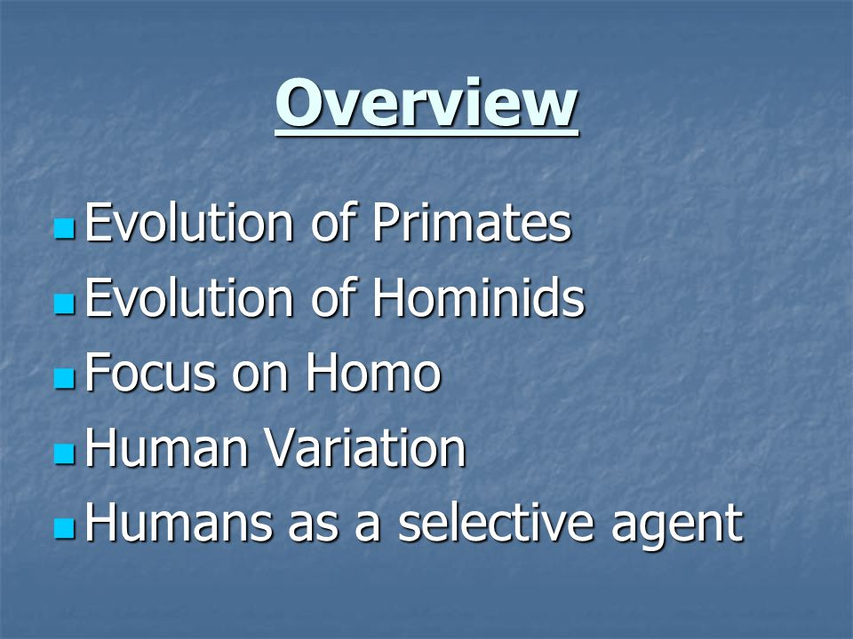 Overview Evolution of Primates Evolution of Hominids Focus on Homo