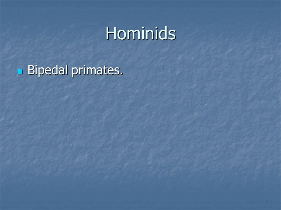 Hominids Bipedal primates.