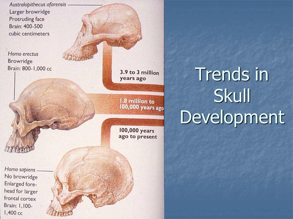 Trends in Skull Development