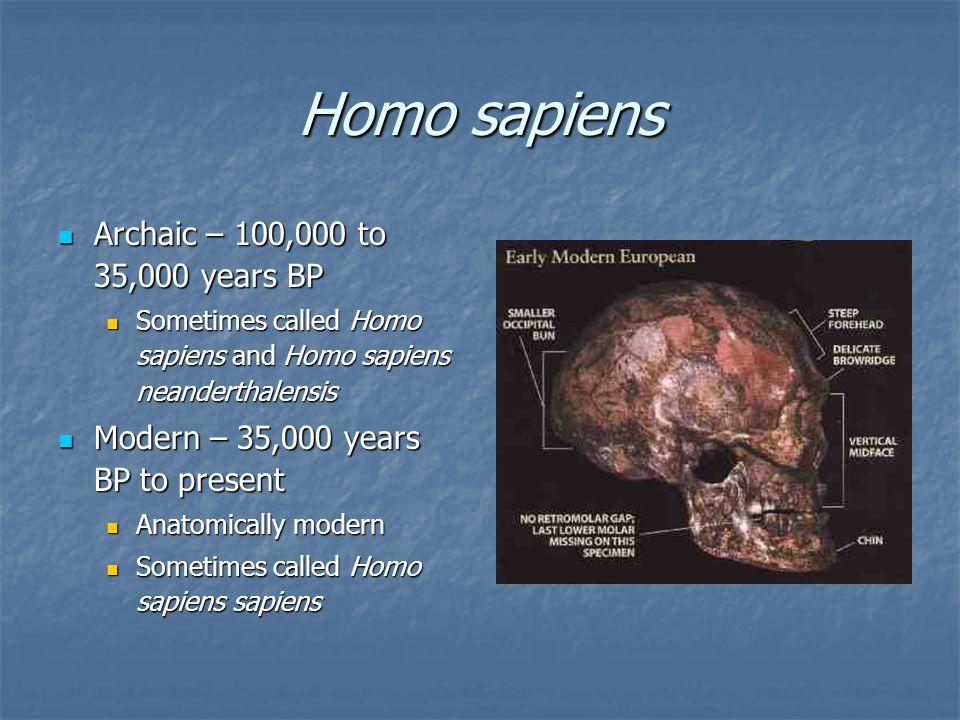 Homo sapiens Archaic – 100,000 to 35,000 years BP