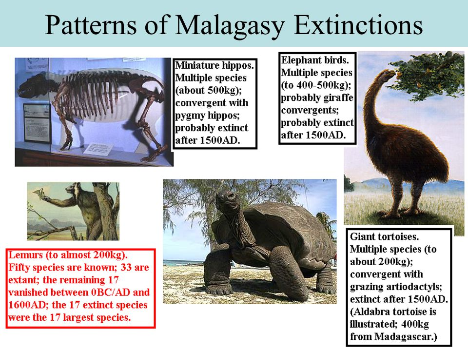 Patterns of Malagasy Extinctions