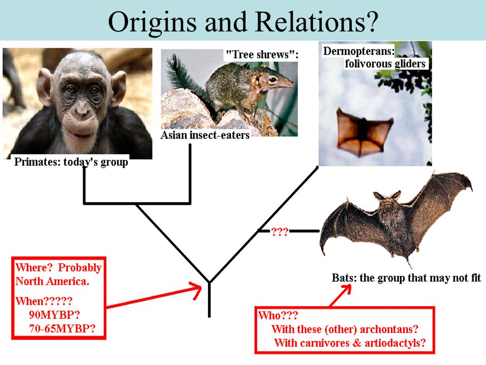 Origins and Relations