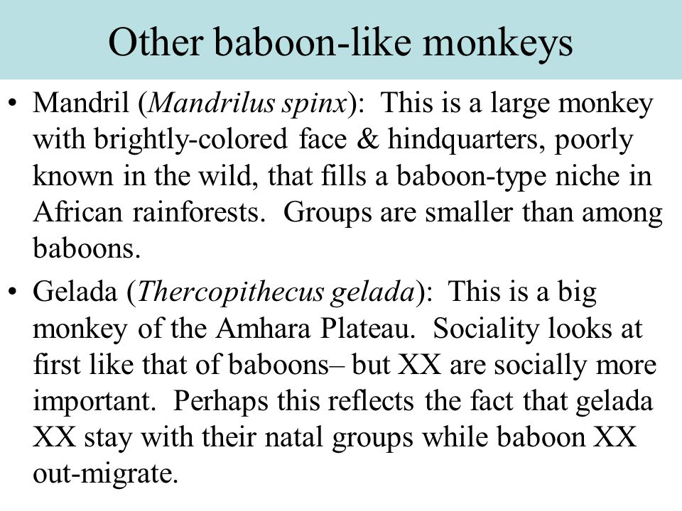 Other baboon-like monkeys