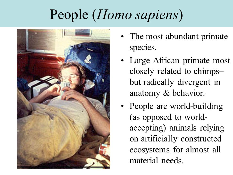 People (Homo sapiens) The most abundant primate species.