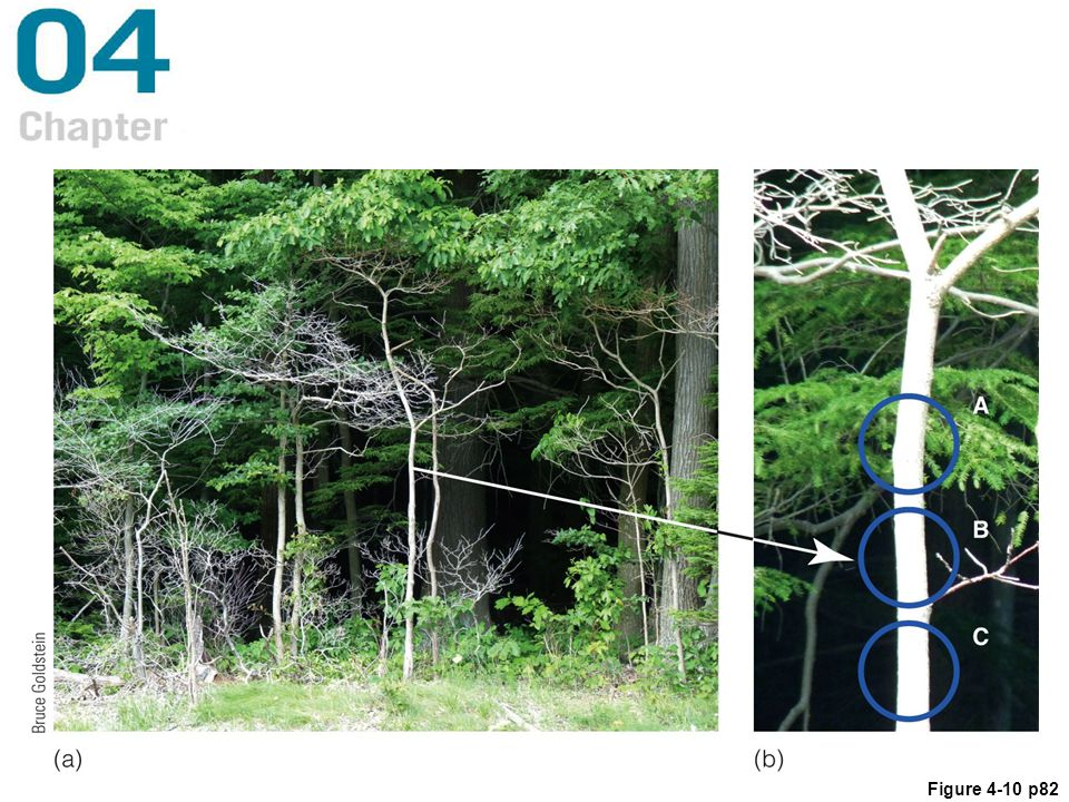 Figure 4. 10 (a) A scene from the Pennsylvania woods