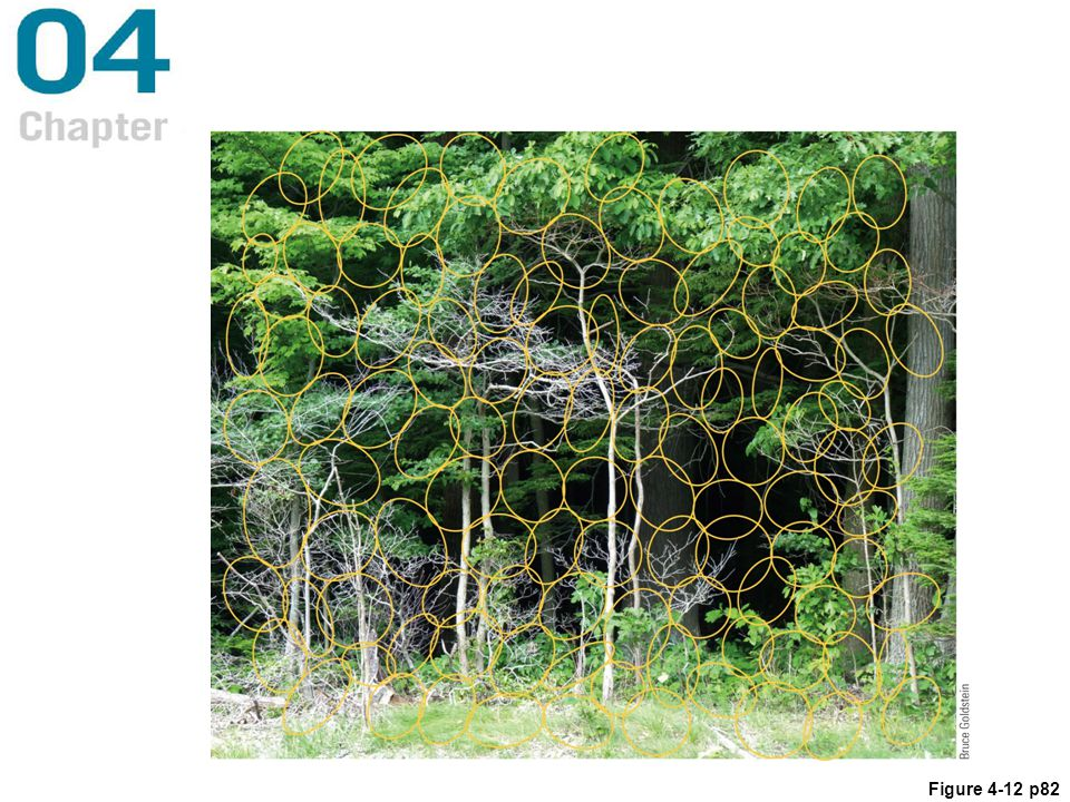 Figure 4.12 The yellow circles and ellipses superimposed on the forest scene each represent an area that sends information to one location column in the cortex. The way these location columns cover the entire receptive field is called tiling.