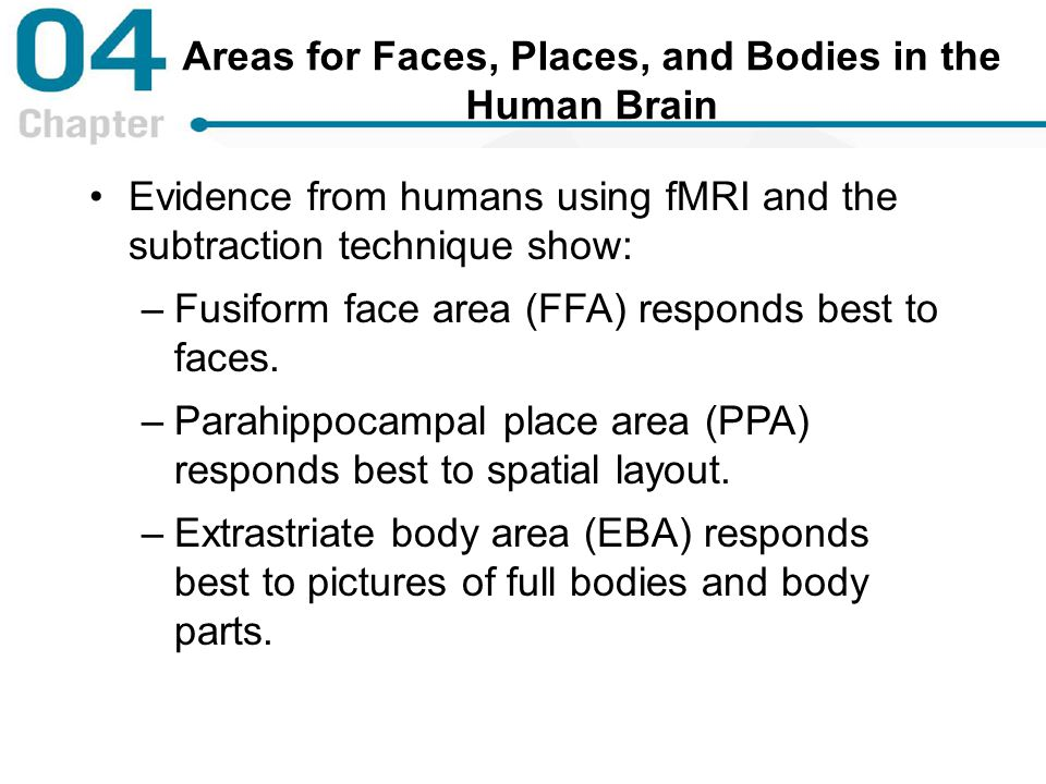Areas for Faces, Places, and Bodies in the Human Brain