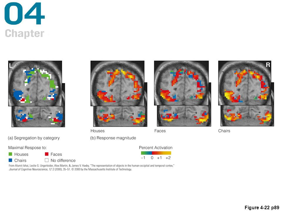 Figure 4.22 fMRI responses of the human brain to various types of stimuli: (a) areas that were most strongly activated by houses, faces, and chairs; (b) all areas activated by each type of stimulus.