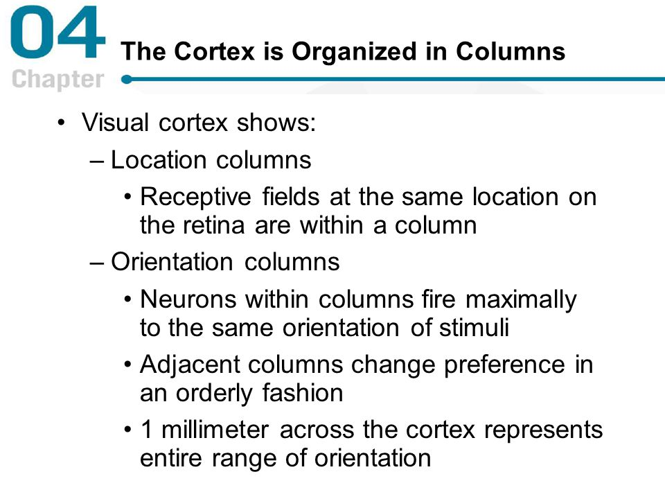 The Cortex is Organized in Columns