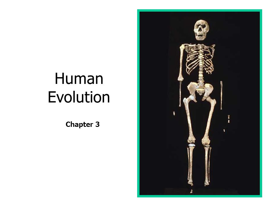 Human Evolution Chapter 3