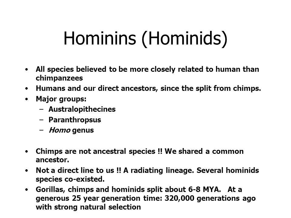 Hominins (Hominids) All species believed to be more closely related to human than chimpanzees.