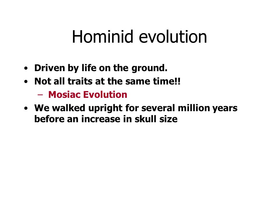 Hominid evolution Driven by life on the ground.