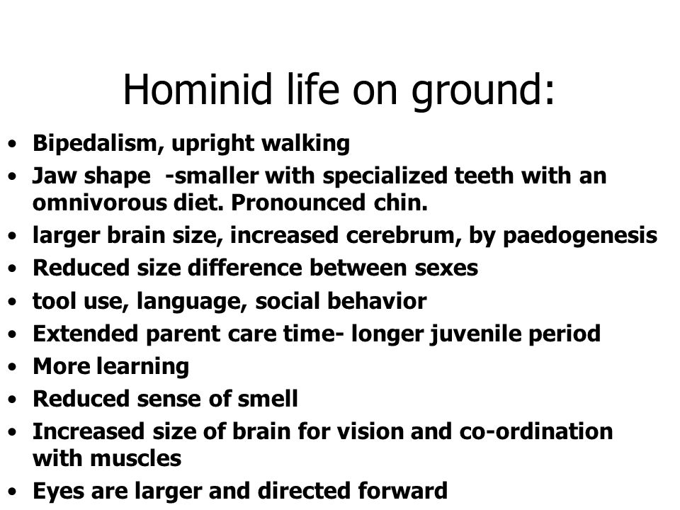 Hominid life on ground: