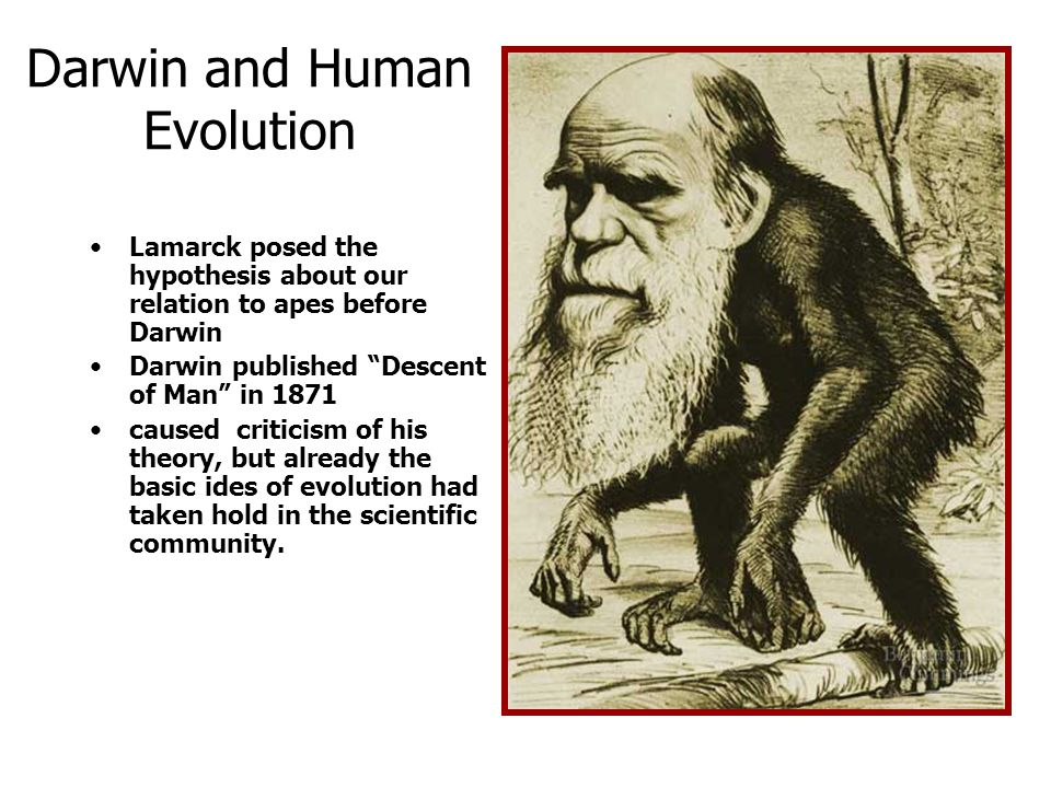 Darwin and Human Evolution