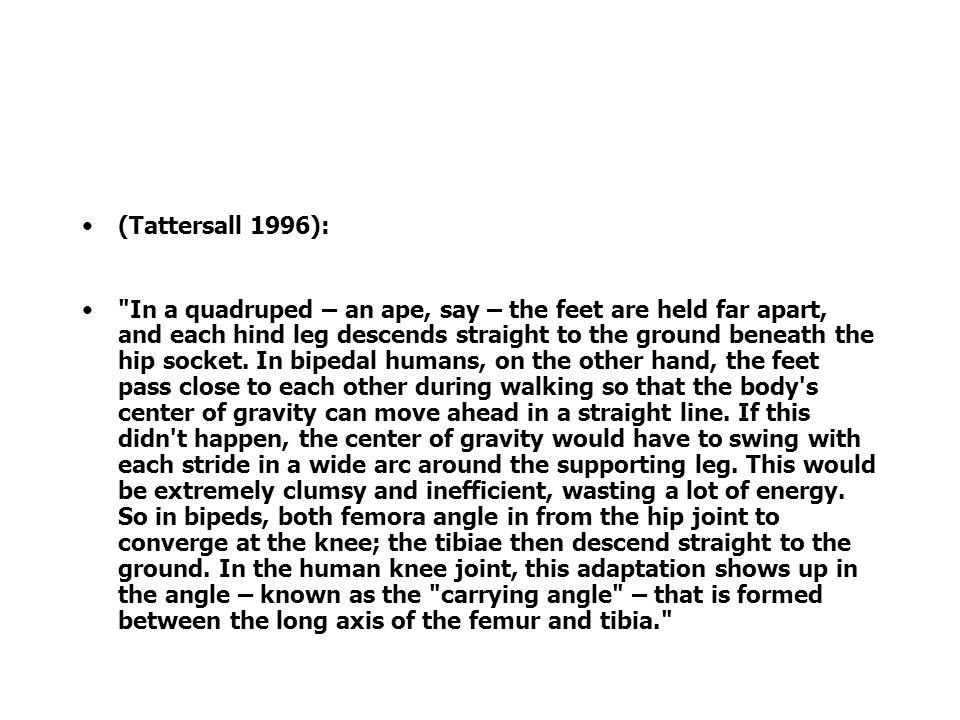 (Tattersall 1996):