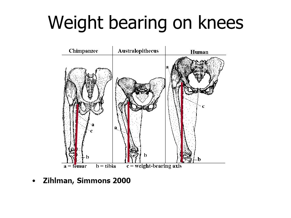 Weight bearing on knees