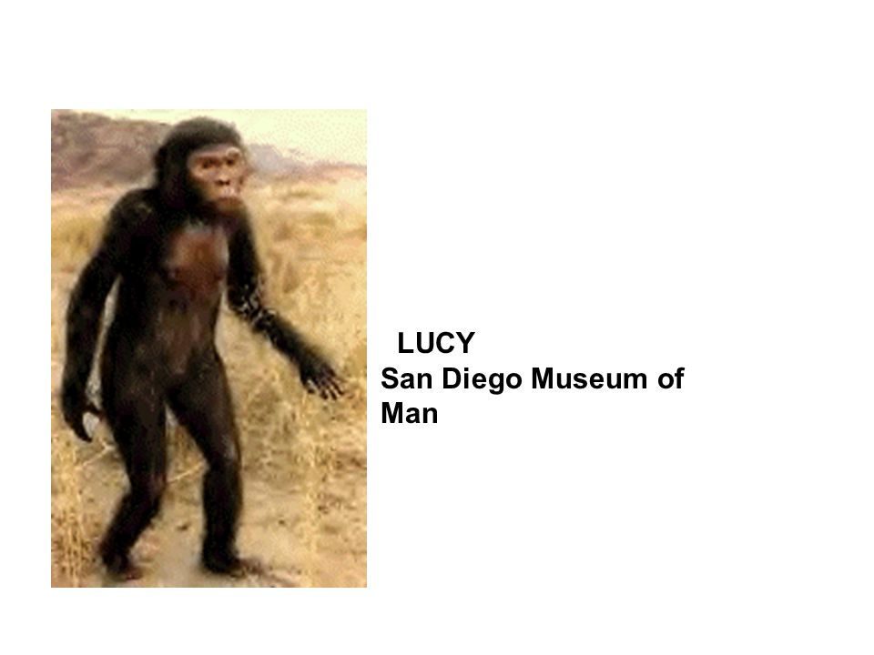 LUCY San Diego Museum of Man